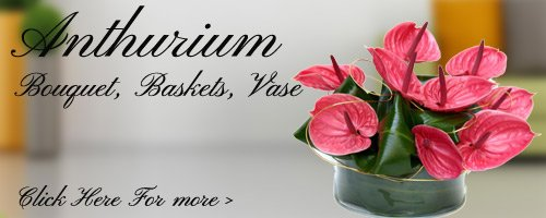 Anthurium Flowers to Vizag