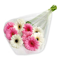 Flowers to India : Pink White Gerbera to India