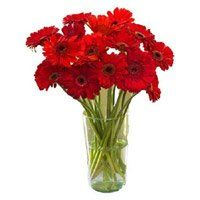 Online Flowers Delivery to Udupi. Deliver Red Gerbera in Vase 12 Flowers