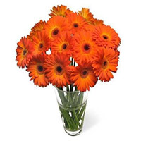 Deliver Online of Orange Gerbera in Vase with 24 Rakhi Flowers in India