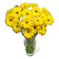Deliver Yellow Gerbera in Vase 15 Flowers in India Online on Rakhi