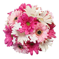 Send Rakhi and Flowers to India. White Pink Gerbera Bouquet 36 Flowers to India