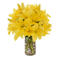 Online Rakhi Delivery to India with 8 Yellow Lily Flower Stems in Vase