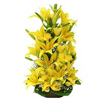Yellow Lilies in India