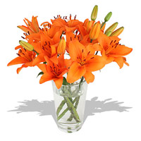 Send Rakhi to India with Orange Lily in Vase 5 Flower Stems