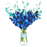 Delivery Rakhi Flowers to India. Blue Orchid in Vase with 12 Stem Flowers in India