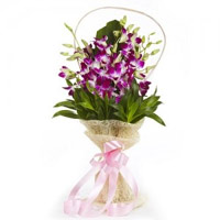 Rakhi to India. Purple Orchid Bunch of 8 Stems Flowers in India