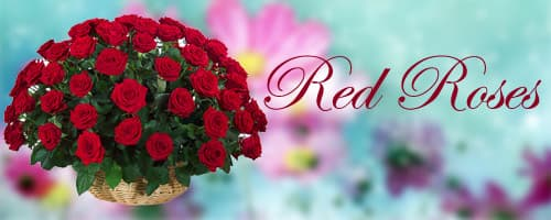 Red Roses to India