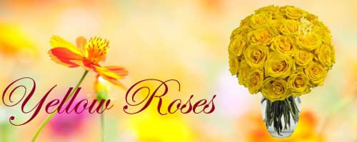 Yellow Roses to India
